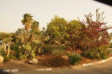 En-Gedin kibbutsia
