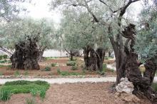 Öljymäki, Getsemane