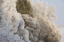 Jännevirran talvea